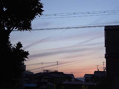 Sora_5_15