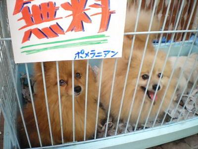 Minatogawa_kinpen3