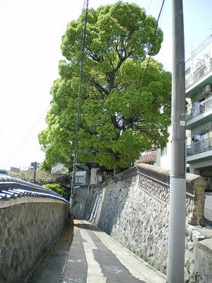 Kobe_19d