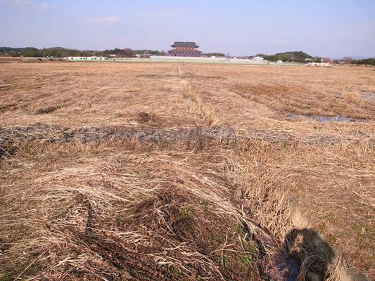 Nara_2010f
