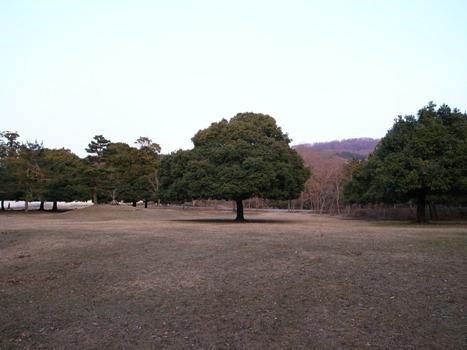 Nara_2hh
