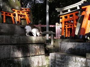 Inari_30