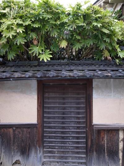 Sasayama21
