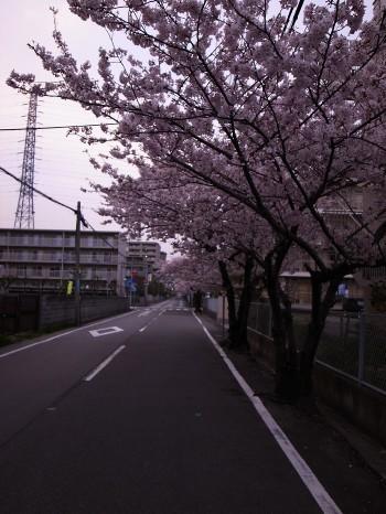 Sakura2011b