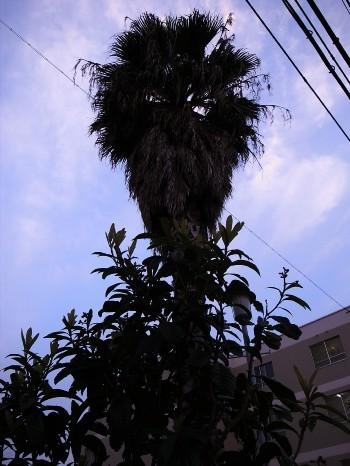 Sakura2011c