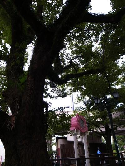 Takarazuka14