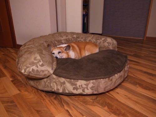 My_dog2_2