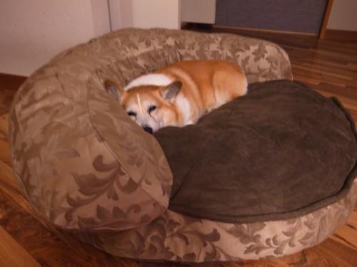 My_dog3